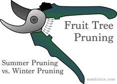 Fruit Trees: Summer Pruning vs. Winter Pruning