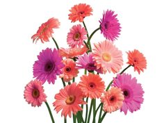 Gerbera Daisy not only has beautiful flowers, but they also remove benzene from the air. They're known to improve sleep by absorbing carbon dioxide and giving off more oxygen throughout the night.