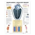 Maintaining A Healthy Weight Anatomical Chart