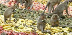 Monkey Buffet Festival - Fruits for the Monkey Buffet Festival