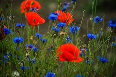 Gli Arcani Supremi (Vox clamantis in deserto - Gothian): Flowers