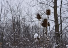 June & December Michigan Roots Story - Thistle