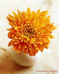 Orange Chrysanthemum Fall Flower Fine Art Macro Nature Photography, Yellow, Floral, Autumn Decor
