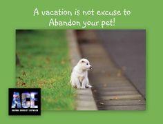 Férias não são desculpa para você abandonar seu animal.