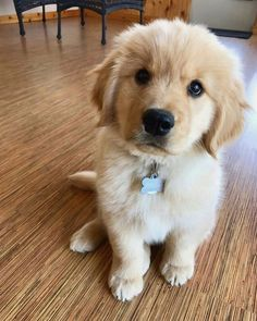 Rollo the golden retriever puppy - Lovely dogs - Puppies Cute Dogs And Puppies, Baby Dogs, I Love Dogs, Doggies, Pet Dogs, Dog Cat, Retriever Puppy, Dogs Golden Retriever, Baby Golden Retrievers
