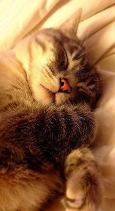 All cats are cute when they're sleeping.