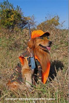 85 Best Golden Retrievers In Costume Images Pets Cut Animals