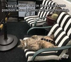 Funny Animal Pictures Of The Day - 14 Images
