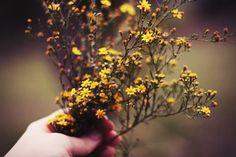 Imagem de flowers, hand, and vintage