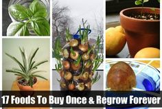 17+Foods+To+Buy+Once+And+Regrow+Forever