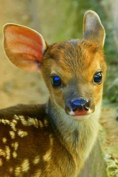 ♥♡♥♡♥♡♥    Oh my word, adorable...
