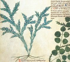 23 Medieval Uses for Rosemary :http://www.medievalists.net/2016/01/22/23-medieval-uses-for-rosemary/