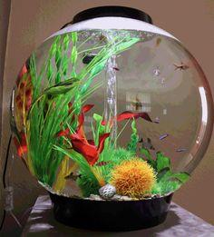 Biorb fish bowl