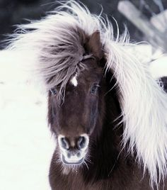 Dressed for the winter ~~~ Beautiful