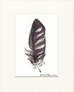 A feather from a falcon symbolizes soul healing, speed and movement