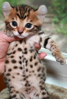 24 Best Mokave Jag Cat images