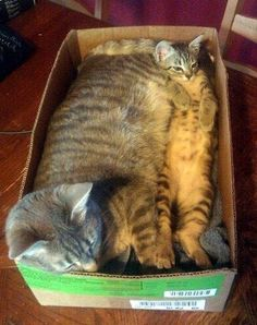 Momma & baby sharing a box