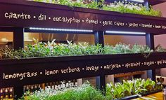 Indoor Herb rack at LYFE Kitchen in Palo Alto, Calif. Nice lesson in herb plant identification. Vertical Herb Gardens, Vertical Garden Diy, Herb Gardening, Indoor Gardening, Indoor Window Garden, Garden Windows, Herb Wall, Container Herb Garden, Plant Identification