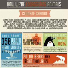 How We're Endangering Animals
