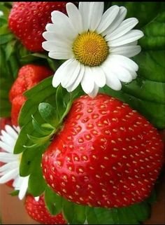 Strawberry And Flower Mobile Wallpaper Beautiful Flowers, Beautiful Pictures, Beautiful Fruits, Strawberry Fields Forever, Nature Wallpaper, Mobile Wallpaper, Belle Photo, Beautiful Creatures, Flora