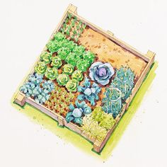 Spring-Harvest Vegetable Garden  You know spring has arrived when you can serve garden-fresh radishes and lettuce with supper. Enjoy the finest flavors of spring with this garden plan.    Garden Size: 4 by 4 feet