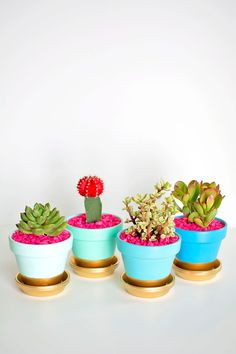 DIY these gold-dipped pots to make succulent centerpieces. love the diy planters Succulent Centerpieces, Succulent Pots, Cacti And Succulents, Potted Plants, Indoor Plants, Succulent Party Favors, Indoor Cactus, Mini Plants, Gold Diy