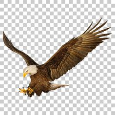 Eagle Hawk Kite Bird PNG Image With Transparent Background - Photo Background Wallpaper For Photoshop, Photo Background Images Hd, Blur Image Background, Blur Background Photography, Studio Background Images, Photo Backgrounds, Picsart Background, Wallpaper Backgrounds, Nature Photography