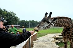 Timbavati Wildlife Park - Wisconsin Dells - Reviews of Timbavati Wildlife Park - TripAdvisor