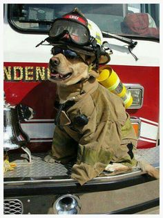 Something to smile about, cutest firefighter ever.