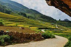 Sapa tours from hanoi Small Group Tours, Tour Operator, Hanoi, Day Tours, North West, Vietnam, Travel, Outdoor, Outdoors