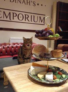 Lady Dinah's Cat Emporium, 152-154 Bethnal Green Road, Shoreditch, London, E26DG