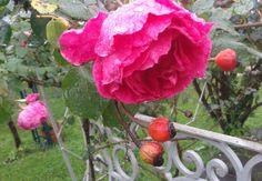http://plantasmedicinalesatusalud.blogspot.com.ar/2015/03/un-sueno-de-nina-la-magia-del-jardin.html