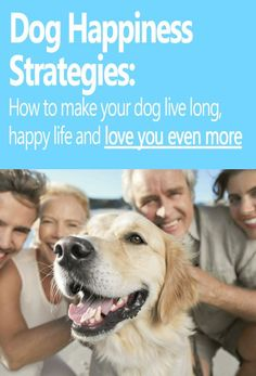 As pet owners, we want our canine friends to be to be happy in our company and in their life. Health is a significant portion of a dog's happiness, and there is quite a bit you can do to increase your furry friend's overall life happiness.