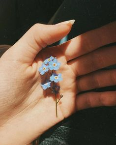 Image about photography in Flowers 🌹 Plants by ♡ann. Spring Aesthetic, Flower Aesthetic, Blue Aesthetic, Aesthetic Vintage, Aesthetic Photo, Aesthetic Pictures, Aesthetic Drawing, Photography Aesthetic, Aesthetic Beauty