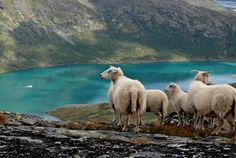 Overlooking lake Gjende, Norway