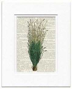 seaweed print III by FauxKiss on Etsy