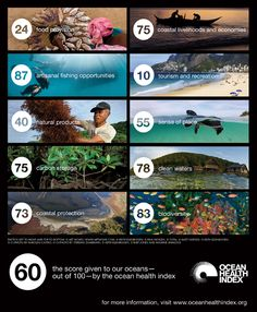 Global scores for 10 Ocean Health Index goals - click to learn how to improve!