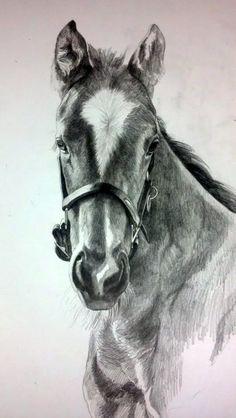 Karmel Timmons: Equestrian Art In Pencil: Blog