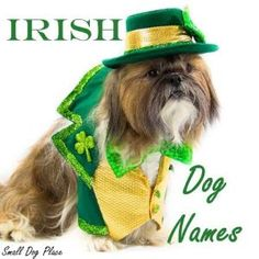 Irish dog names make excellent choices for Irish dog breeds, but they are also perfect for other reasons. Irish Dog Breeds, Great Dog Names, Red And White Setter, Glen Of Imaal Terrier, Irish Water Spaniel, Irish Names, Irish Terrier, Wheaten Terrier, Puppy Names