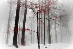 Winter Forest - 65+ Awesome Winter Landscape Photos  <3 <3