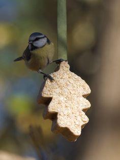 Slik lager du meiseboller i figurform - Moseplassen Bird Food, Bird Feeders, Greenery, Berries, Christmas Decorations, Homemade, Create, Outdoor Decor, Flowers