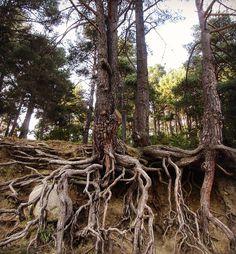 #roots #treeroots #andorra Tree Roots, Andorra, Garden, Instagram Posts, Nature, Plants, Garten, Naturaleza, Lawn And Garden