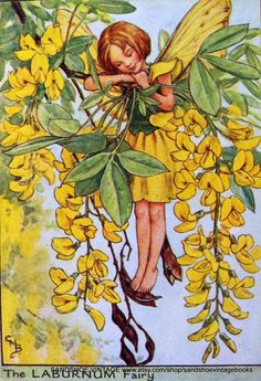 1930s The LABURNUM FAIRY Cicely Mary by sandshoevintageprint