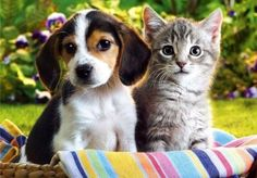 Can't decide between dog or cat? Choose the right pet for you!