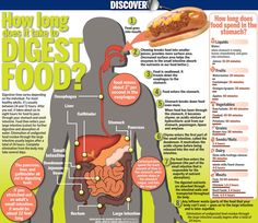 How long does it take to Digest Food - Meats can take up to 4 hours leaving you sluggish and even constipated.  Make sure to keep the majority of your diet of easy to digest grains and veggies.