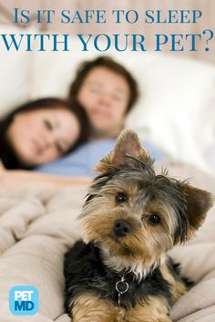 Do you share your bed with your pet? Find out if that is the right way to go!