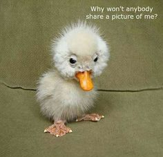 cute ugly duckling is sad....
