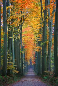 Autumn Solitude, Sonian Forest, Brussels, Belgium