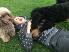Well give me the ball then...Hugo the Cavoodle takes on Reuben