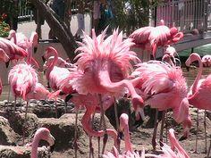 Pink Flamingos : I Love Flamingos Story & Experience
